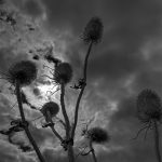 telscombe-clifftop-plant-life