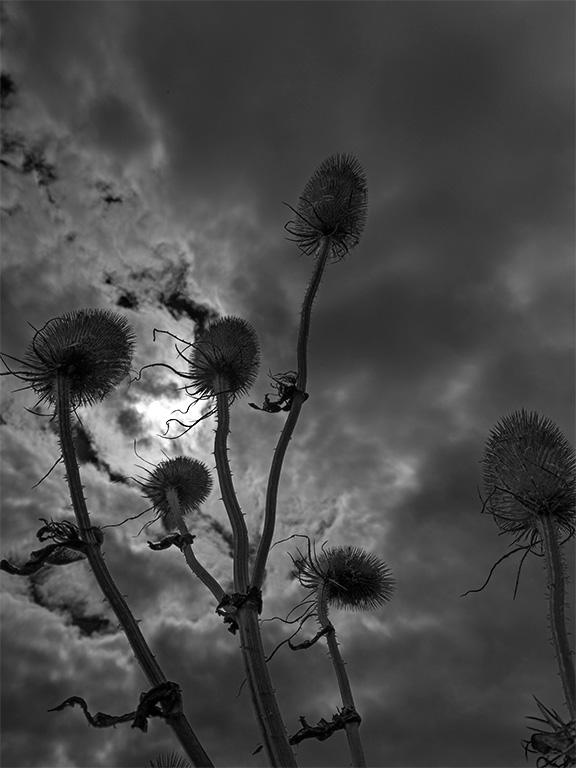 telscombe-clifftop-plant-life